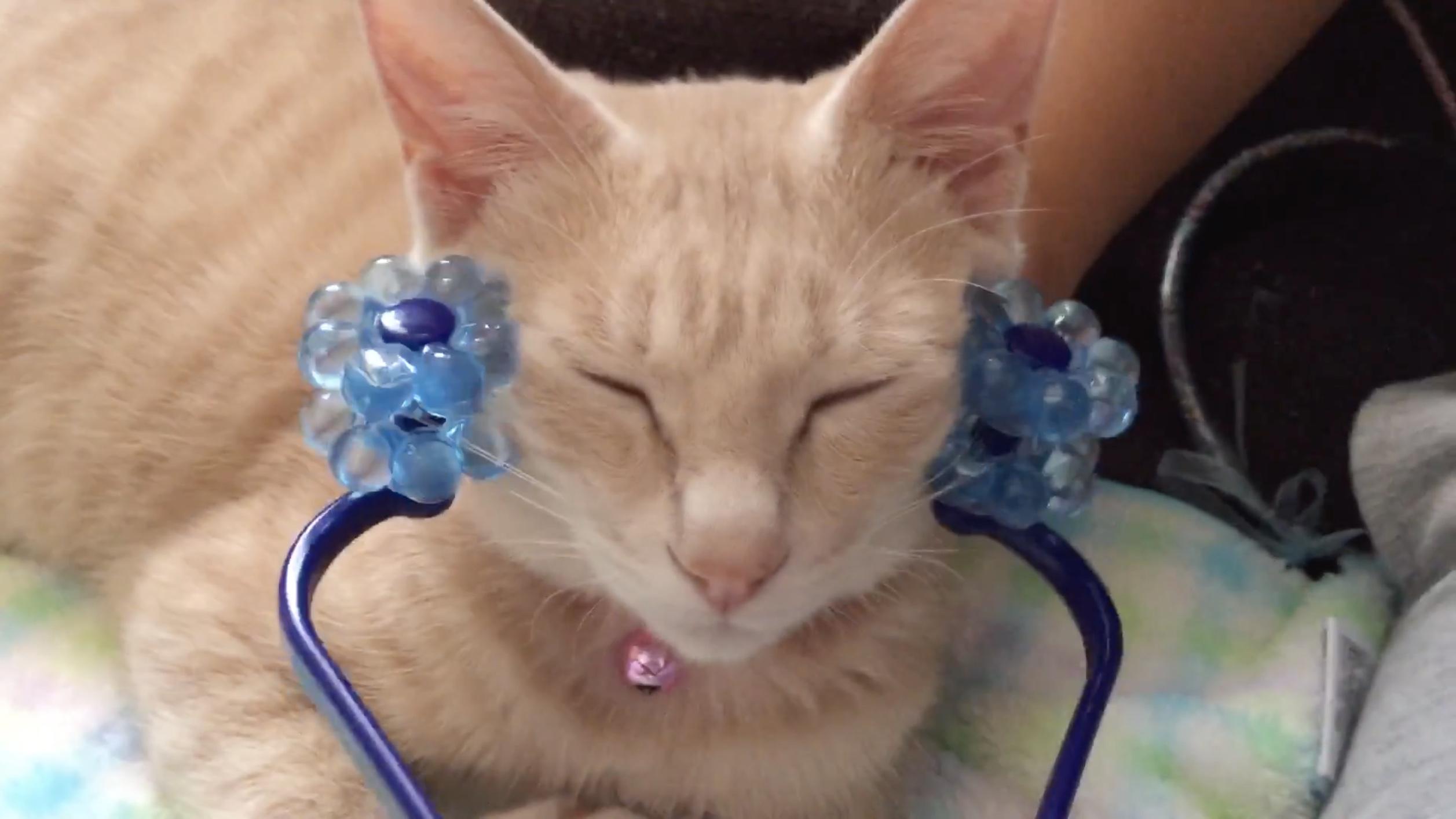 目を細め小顔ローラーにゴロゴロいう猫、見ているこちらが癒やされほぐされ