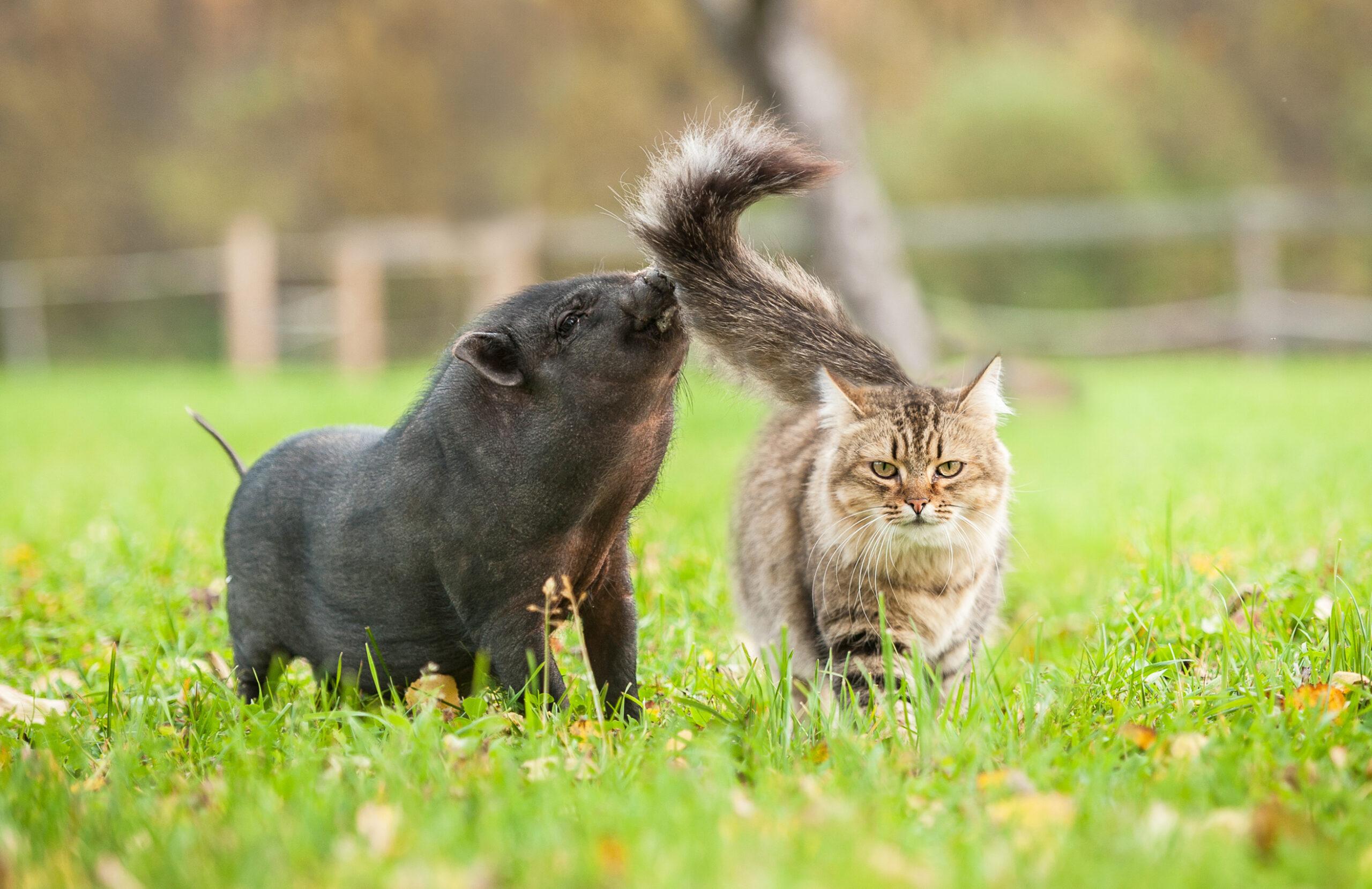 猫本書評:豚にも歴史はありますし、猫にも歴史はありますよ